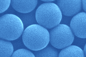 SEM image of nanoparticles